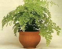 чернаямагия - Магия растений. Магические свойства растений. Обряды и ритуалы. Амулеты и талисманы из растений.  Pi8yoXXsj40