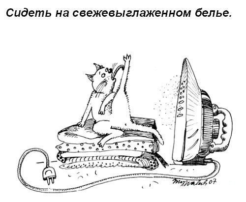 Жизнеописание домашней кошки