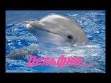 Дельфин - Христианский Рассказ