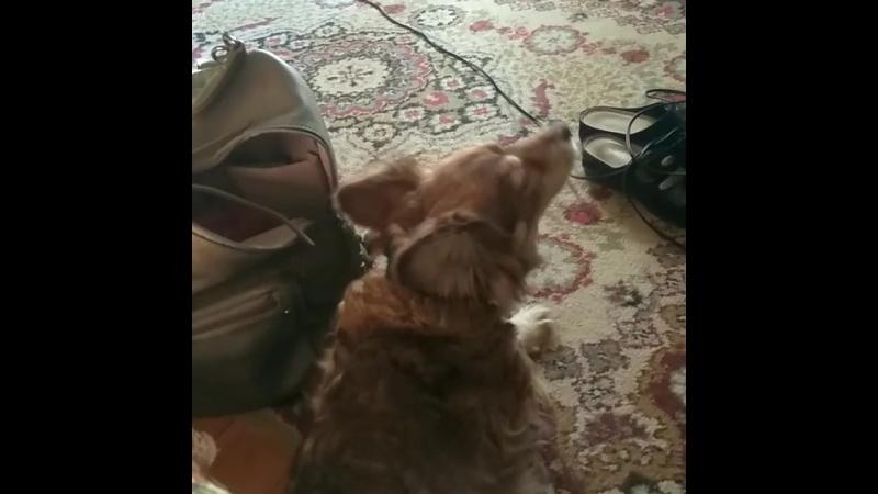 с собакой дома у бабушки
