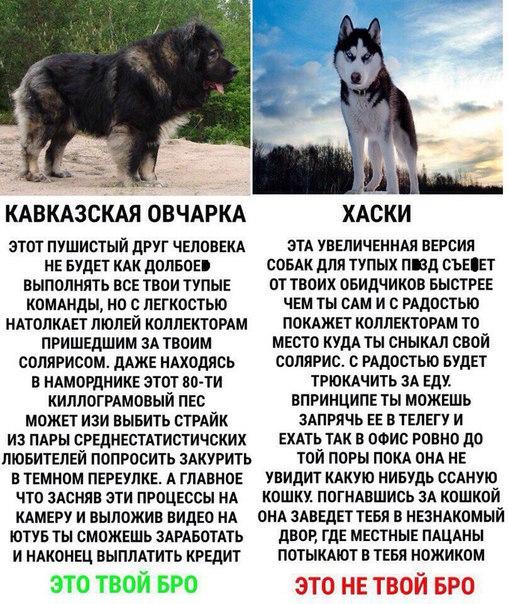 Совет при выборе собаки