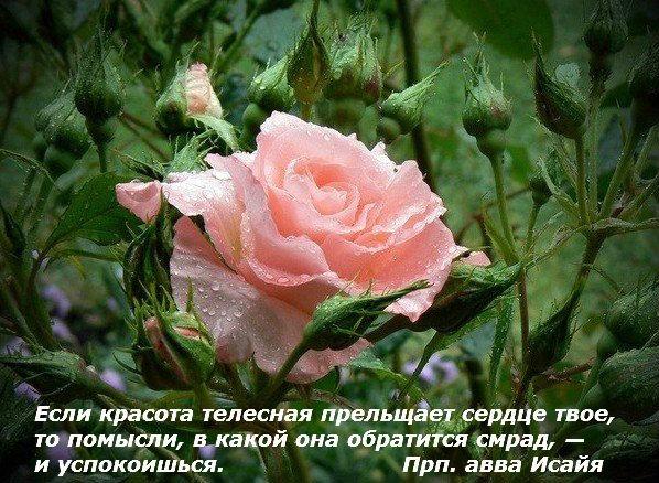 http://cs312820.vk.me/v312820993/7f60/qD1LHkk9m_M.jpg