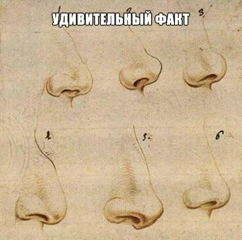 Ученые: форма носа напрямую влияет на успешность человека  По мнению специалистов, люди....