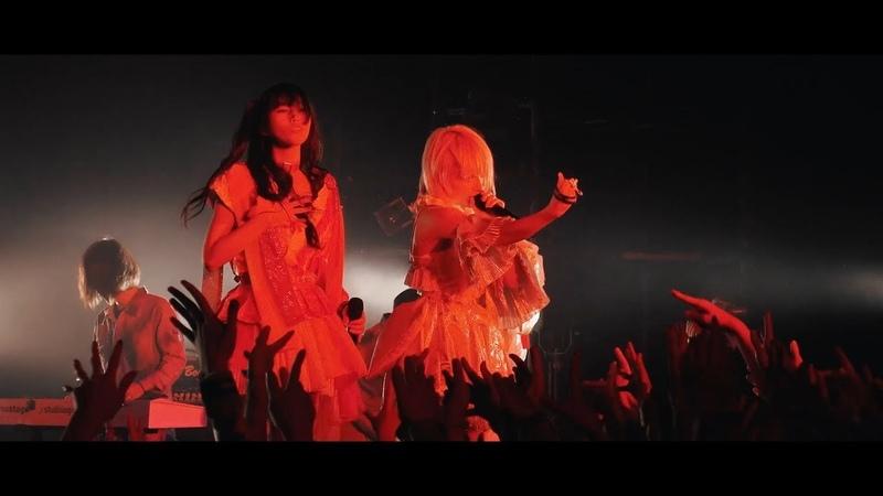 ぜんぶ君のせいだ。Cult Scream Official LIVE MOVIE