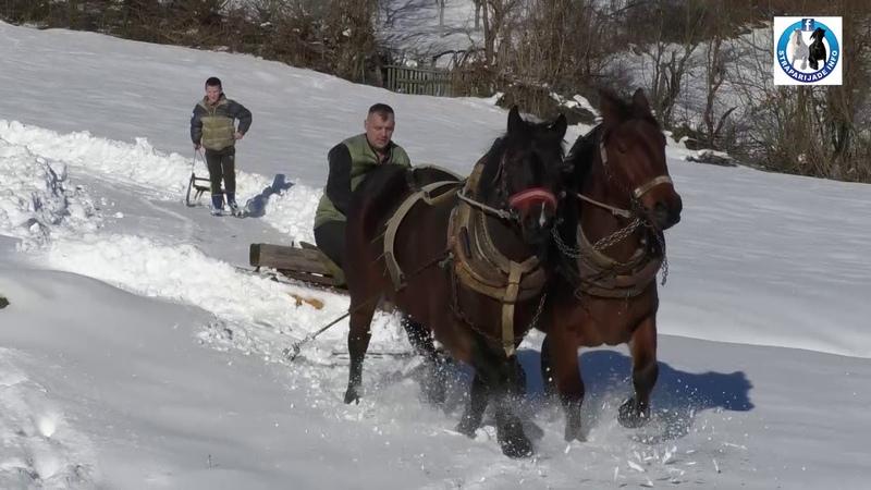 -Sanke i konji iz Vrbljana Donjih -2019