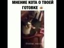 Мнение кота о твоей готовке
