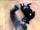 Прикольные кошки Веселые бои кошек и собак Забавно смотреть!!