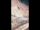 Deer climbs a nearly vertical dirt bank with ease.