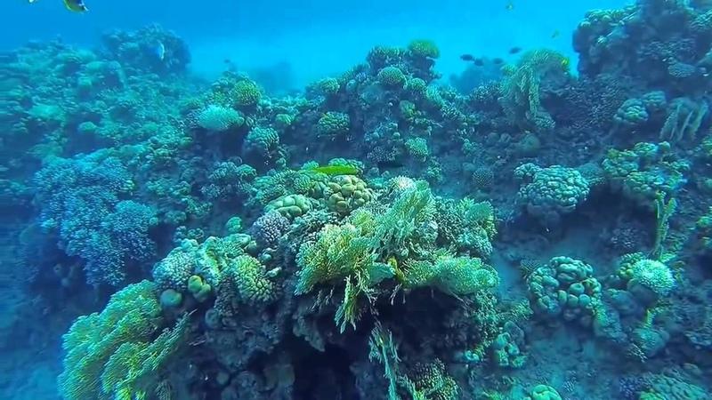 Подводный мир красного моря! Under water Red Sea