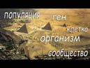 Иерархический анализ пирамид Египта
