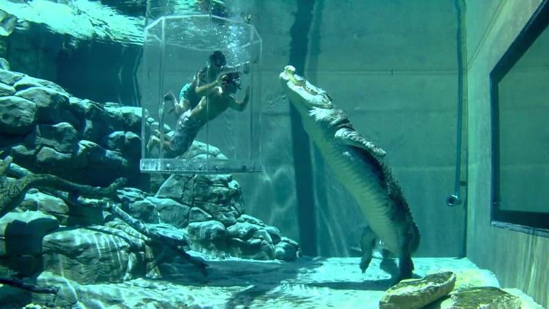 Crocosaurus Cove in Darwin - Australia