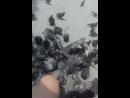 кормим голубков