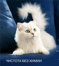 белый кот английский язык