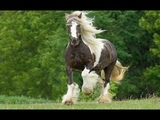 Most Beautiful Horse Breeds Around The World