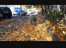 пинают и кидают листья
