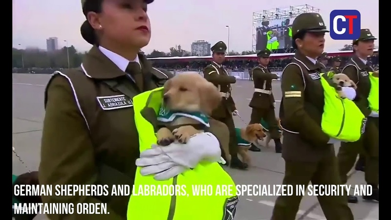 Dogs steal the show at military parade in Chile