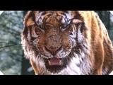 Великий тигр (2015)