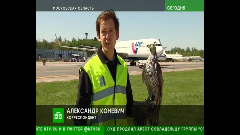 Авиационные орнитологи в новостях НТВ от 28.05.2018