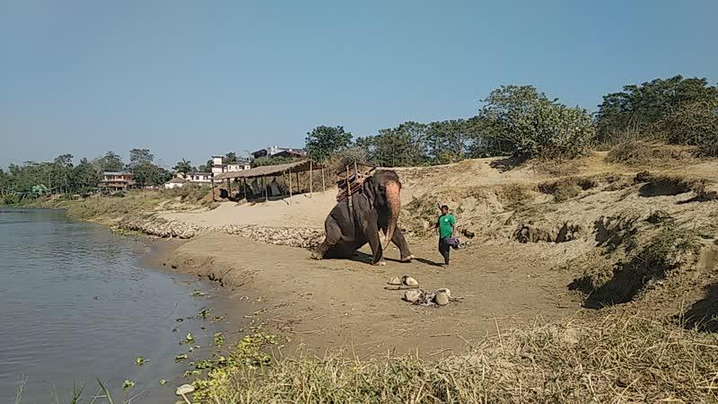 Слоник слоник))