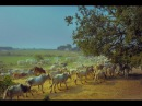 Вриндаван - Земля Кришны