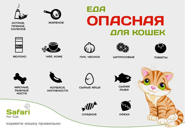 Чем кормить котов в домашних условиях - Чем кормить кастрированного кота