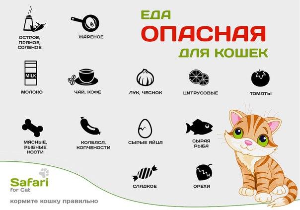 Чем кормить взрослого кота в домашних условиях 930