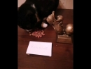 Кошка Месси сделала ставки на Роналдо. Как думаете, она права? 😂😂😂 Кто по вашему выиграет золотой мяч? ⚽⚽⚽ чемпионатмира2018 ч