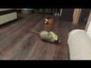 Когда котяшка может развлечь себя сама