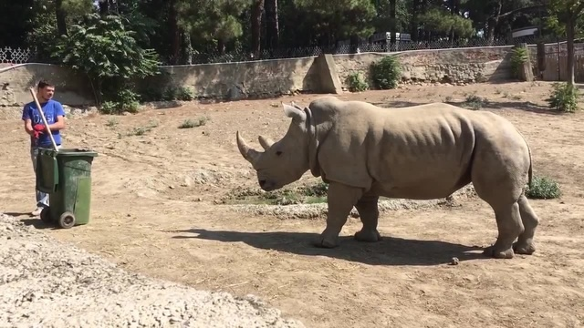 Man VS rhino
