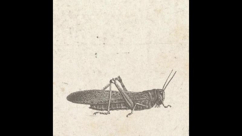 Gotshell - Katarsis [MORD053]