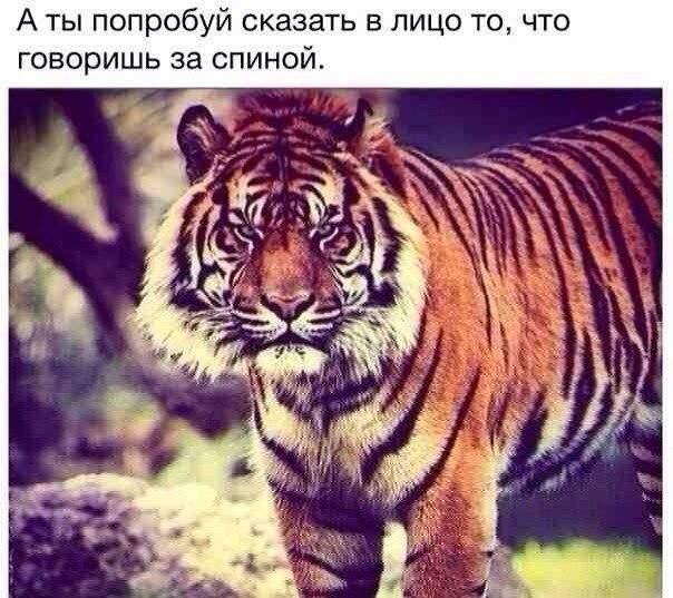 Картинка тигра с надписью