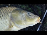 Рыбалка в Германии - 9 Ловля карпа на фидер - Fishing For Big Carp