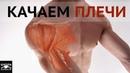 ТРЕНИРОВКА ПЛЕЧ ДЛЯ ГОРИЗОНТА 3 ЛУЧШИХ УПРАЖНЕНИЯ