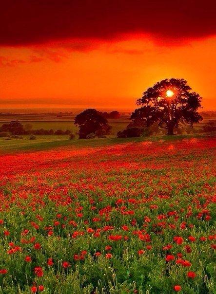 Отцвели цветы, падают листья, птицы молчат, лес пустеет и затихает.ОСЕНЬ. - Страница 5 XEJDWu8FVVg