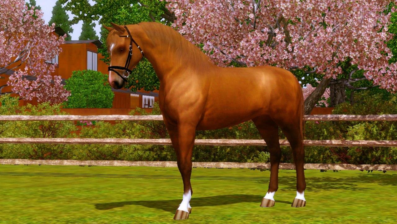 Регистрация лошадей в RHF 1.1 - Страница 5 Nqcbual-bkM