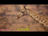 Name and sound of Natural animal - Kids Learning KIDS GAMES