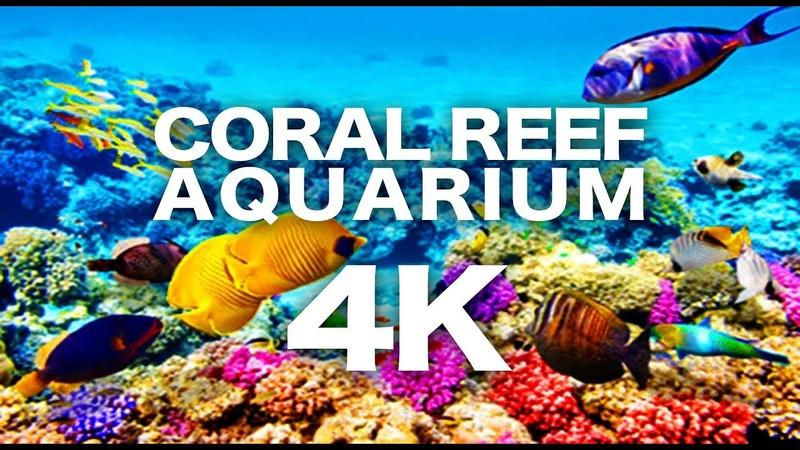 CORAL REEF AQUARIUM 4K | NO MUSIC 2 HOURS | RELAXING 🐠