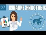 Купание животных. Советы ветеринара