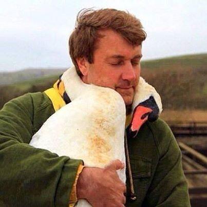 При операции по спасению раненых птиц, лебедь обвился вокруг шеи спасателя.
