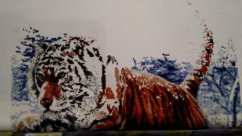 Почему СКОРОСТЬ УВЕЛИЧИЛАСЬ? Хвалюсь и делюсь секретами. Золотое руно. Прыжок тигра. Отчет 10.