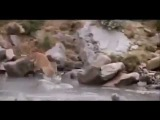 Lion vs. Bear - mega fight (Лев против Медведя) - Потрясающее видео!!