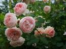 рвите розы, пока не поздно. на латинском эта фраза звучит как carpe diem.