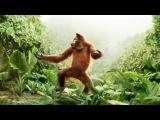 Прикол - Танцующая обезьяна. Всем хорошего дня!
