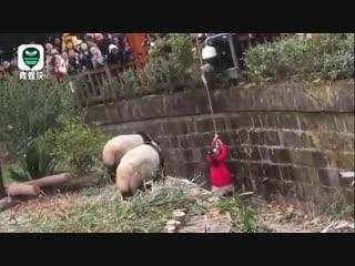Жесть.Ужас.В Китае девочку чудом спасли из вольера с пандами. Азербайджан Azerbaijan Azerbaycan БАКУ BAKU BAKI Карабах 2019 HD