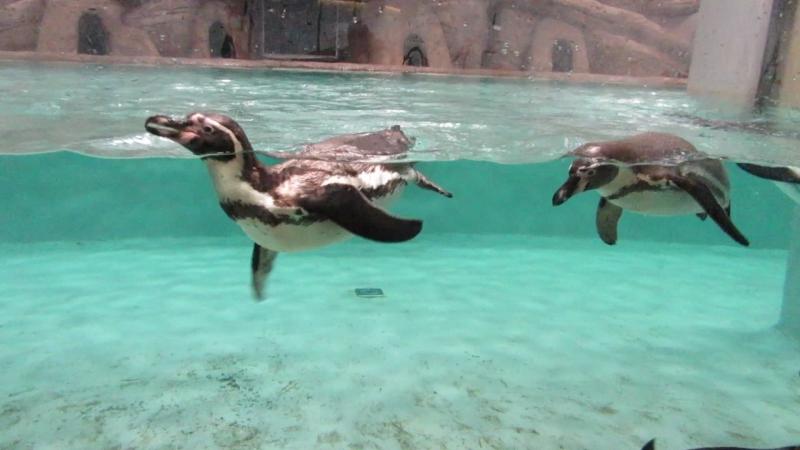 Пингвины 10