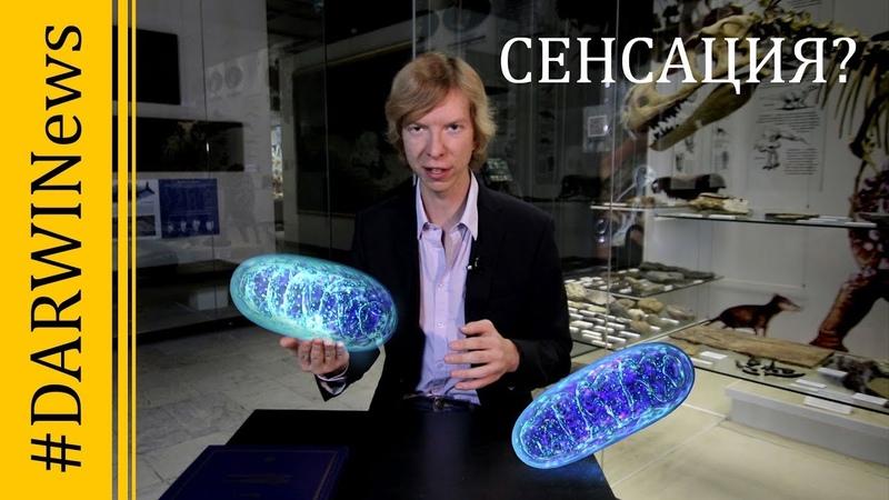 Микроб LUCA - ровесник Земли. Новые факты о происхождении жизни. DARWINews 9.4