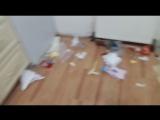Хаски навел порядок на кухне