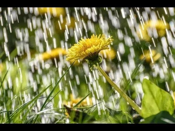 Желтый дождь Волшебный тембр Олег Ухналёв