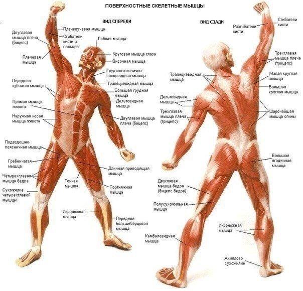 Как ускорить мышечный рост ?