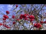 Последнее время - Светлана Малова (христианская песня, клип)